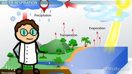The water cycle precipitation condensation and evaporation respiration in the water cycle ccuart Choice Image