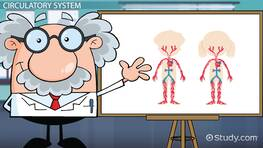 Parts of the Circulatory System: Lesson for Kids