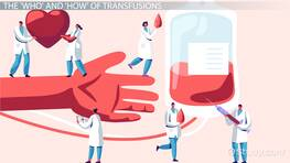 Blood Transfusions: Lesson for Kids