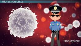 White Blood Cells Lesson for Kids