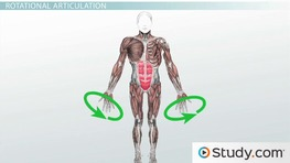 How Muscular Contraction Causes Articulation: Definition & Types
