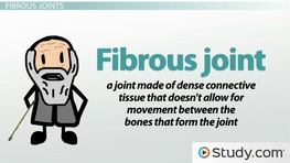 Types of Joint Movement & Tissue Structure and Function