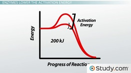 Function of Enzymes: Substrate, Active Site & Activation Energy