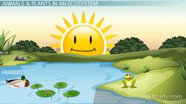Pond Ecosystem Lesson for Kids