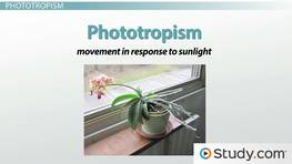 Tropisms: Phototropic, Geotropic and Thigmotropic Plant Growth