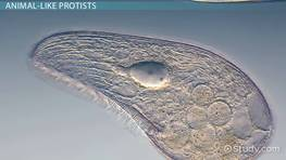 Importance of Protists