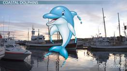 Dolphin Habitats: Lesson for Kids