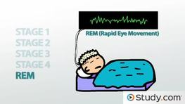 What is the Sleep Cycle? - Definition, Stages & Disorders