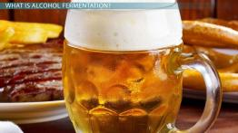 Alcohol Fermentation: Definition, Equation & Process