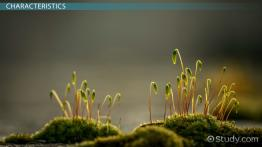 Bryophytes: Definition, Types, Characteristics & Examples