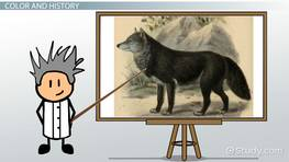 Black Wolf Facts: Lesson for Kids