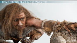 Homo Erectus: Definition, Characteristics & Discovery