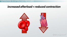 Cardiac Afterload: Definition & Reducing Agents