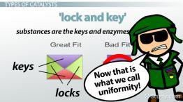 Catalysts: Definition, Types & Examples - Video & Lesson Transcript |  Study.com