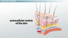 Keratin Protein The Epidermis