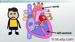 Heart Failure: The Left Heart, Lungs, & Etiology
