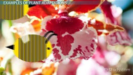 Plant Adaptations: Lesson for Kids