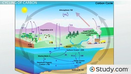 Cycles of Matter: The Nitrogen Cycle and the Carbon Cycle