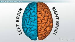 The brain hemispheres left brainright brain communication and brain lateralization function definition test ccuart Images