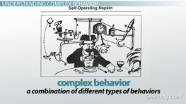 Complex Behavior: Definition & Learning