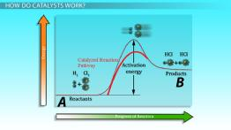 Effect of Catalysts on Rates of Reaction