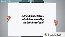 Environmental Impact: Society's Relationship and Issues