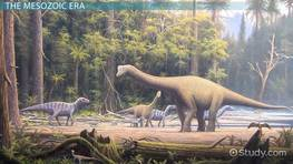 The Mesozoic Era: Facts, Events & Timeline