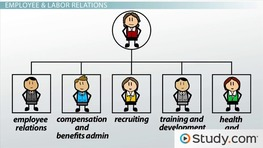 The Internal Structure of an HR Department - Video & Lesson