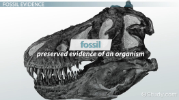 Fossil Evidence: Definition & Overview