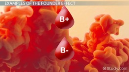 Founder Effect: Example & Definition
