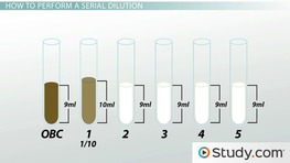 Serial Dilution in Microbiology: Calculation, Method & Technique