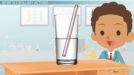 Capillary Action of Water: Definition & Examples