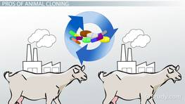 Animal Cloning: Pros & Cons