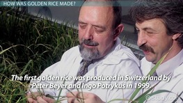 GMOs: Improving Nutrition and Golden Rice