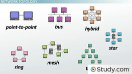 How Star, Bus, Ring & Mesh Topology Connect Computer Networks in Organizations