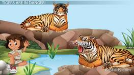 Why are Tigers Endangered? - Lesson for Kids