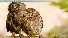 Life Cycle of an Owl: Lesson for Kids