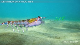 The Food Web of the Pacific Ocean