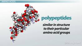 Polypeptide: Definition, Formation & Structure