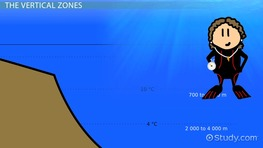 Characteristics of Different Ocean Zones