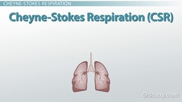 Kussmaul Breathing, Cheyne-Stokes Respiration & Biot's Respiration Terms