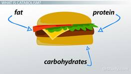 Catabolism: Definition & Examples