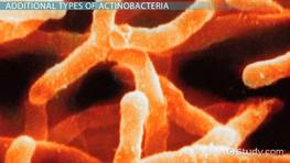 Actinobacteria: Definition & Characteristics preview