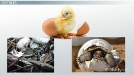 Animals that Hatch from Eggs: Lesson for Kids