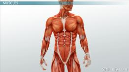 Medical Specialists of the Muscular System