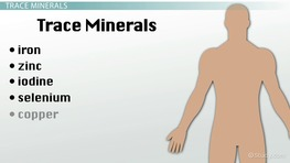 Minerals: Functions & Food Sources
