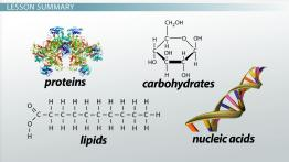 Molecules in Living Organisms: Number & Size