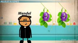 Mendel's First Law & Its Application