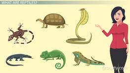 Reptiles Lesson for Kids: Definition, Characteristics & Facts