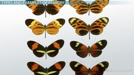 Mimicry in Animals: Definition & Examples